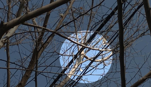 電線にかかった枝の剪定は東京電力に無料で依頼できる?