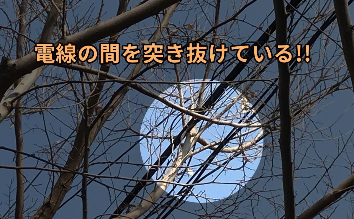 電線にかかった枝