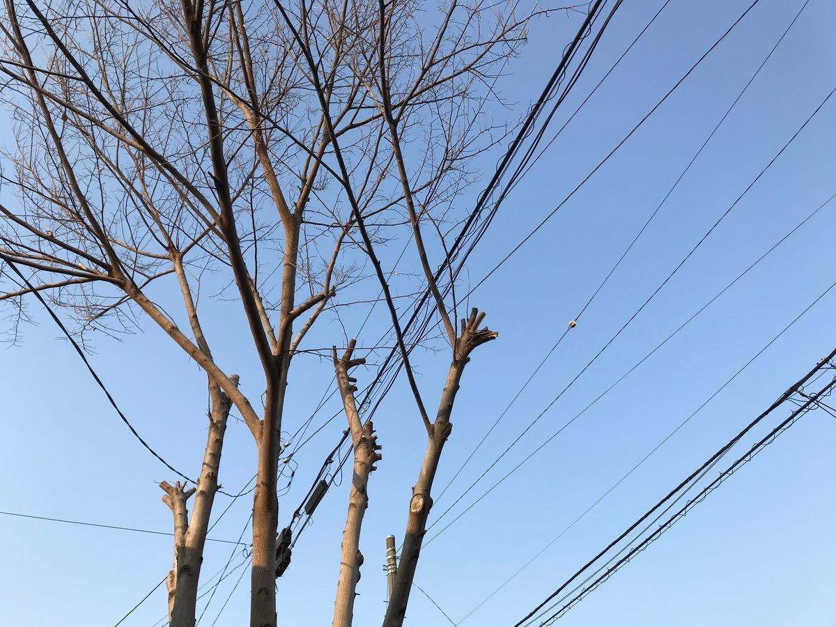 東京電力に剪定してもらった枝